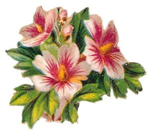 free-vintage-cli-art-flowers-pink-white-hibiscus